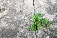 élevage d'arbre Images stock