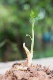 élevage d'arbre Photographie stock