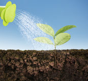Élevage d'arbre de plante verte Photographie stock libre de droits