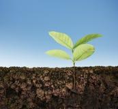 Élevage d'arbre de plante verte Image libre de droits