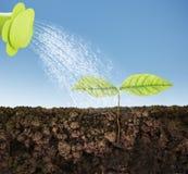 Élevage d'arbre de plante verte Images libres de droits