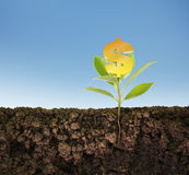 Élevage d'arbre de plante verte Images stock
