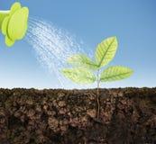 Élevage d'arbre de plante verte Photos libres de droits