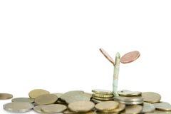 Élevage d'argent Photo libre de droits
