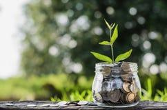 Élevage d'argent de concept et petit arbre Images stock