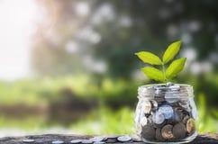 Élevage d'argent de concept et petit arbre Photographie stock libre de droits