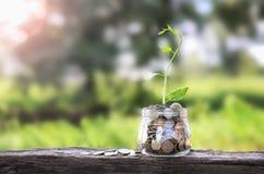 Élevage d'argent de concept et petit arbre Image stock