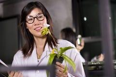 Élevage d'orchidée Image libre de droits