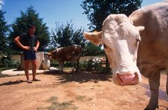Élevage dans Kosovo. Images libres de droits