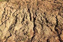 Élevage dans le sol sec Photos stock
