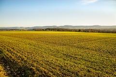 Élevage de blé d'hiver Photo libre de droits