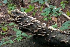 Élevage de champignon Photographie stock libre de droits