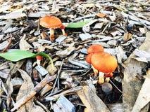 Élevage de champignon Photos stock