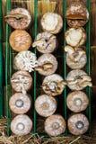 Élevage de champignons Photo stock