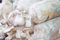 Élevage de champignons de couche Image libre de droits