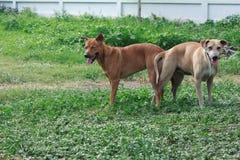 Élevage de chien Photo libre de droits