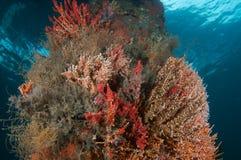 Élevage de corail doux sur le support de passerelle Photo libre de droits