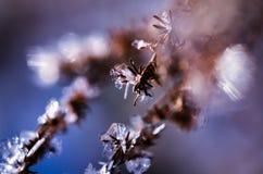 Élevage de cristaux de glace en hiver Photo libre de droits