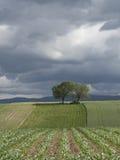 Élevage de cultures agricole dans la campagne accidentée Image libre de droits