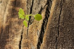 Élevage de feuilles de jeunes Photo stock