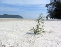 Élevage de jeune arbre de pin Images libres de droits