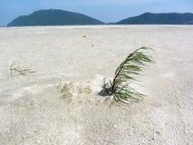 Élevage de jeune arbre de pin Photos libres de droits