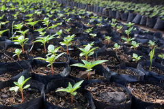 Élevage de jeune plante Photos libres de droits