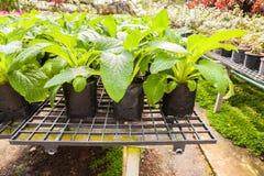 Élevage de jeune plante Image stock