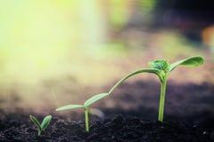 Élevage de jeune plante de vintage Image libre de droits