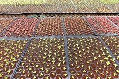 Élevage de jeunes plantes d'usine Photographie stock