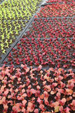 Élevage de jeunes plantes d'usine Image libre de droits