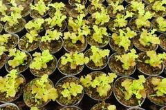 Élevage de jeunes plantes d'usine Images libres de droits