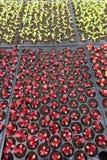 Élevage de jeunes plantes d'usine Images stock
