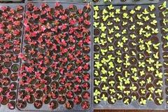 Élevage de jeunes plantes d'usine Image stock