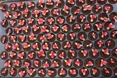 Élevage de jeunes plantes d'usine Photos stock