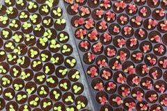 Élevage de jeunes plantes d'usine Photos libres de droits