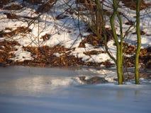 Élevage de l'étang glacé Photo stock
