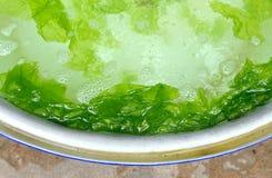 Élevage de lattuce de mer dans le bassin Photos stock