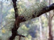Élevage de lichen Images stock