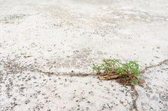 Élevage de mauvaise herbe Photos stock