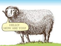 Élevage de moutons Image libre de droits