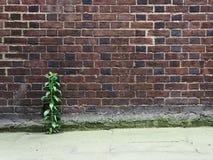 Élevage de mur de briques et d'usine Photographie stock