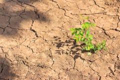 Élevage de peu d'arbre sur le sol sec et de fente Photos libres de droits