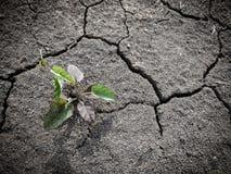 Élevage de peu d'arbre sur le sol sec et de fente Image stock