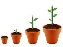 Élevage de plante verte Photographie stock