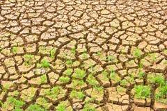 Élevage de plante verte Photographie stock libre de droits