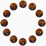 Élevage de plantes Les usines élèvent des étapes Périodes de croissance de jeunes plantes Image libre de droits