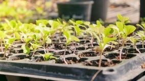 Élevage de plantes vertes Photographie stock libre de droits