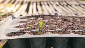 Élevage de plantes vertes Photos libres de droits