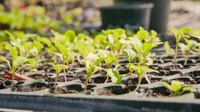 Élevage de plantes vertes Images stock